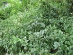 Unweeded weeds