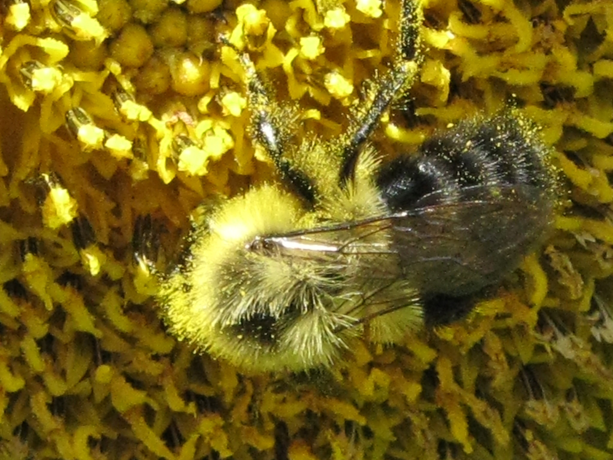 """pollen essay The names pollen and pollen midwest, our logos, designs, text, graphics, pictures and all other content on the site (collectively """"content"""") is the property of pollen midwest or the individuals who created it."""