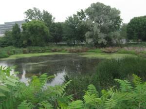 Pond near Readercon