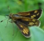 Butterfly nowhere near the butterfly bush