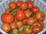 More reddening tomatoes