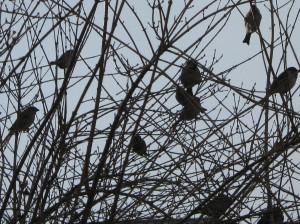 Birds like fruit