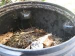 Compost after ten days
