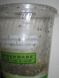 This cup is made of corn, is environmental sustainable, compostable...