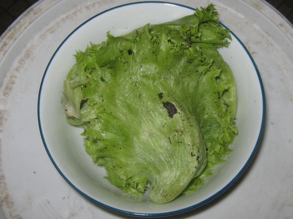 A bowl of lettuce, complete with dirt it grew in.