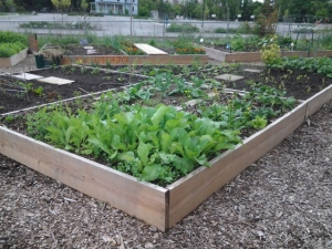 Community garden plot full of greenery