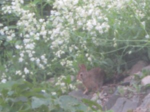A bunny eating the wildflowers